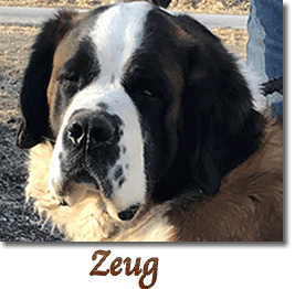 VDH Dogs | Upcoming Litters