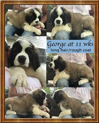VDH Dogs | Puppies For Sale